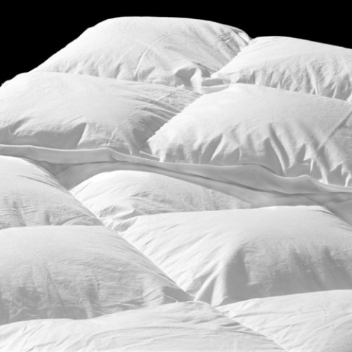 White Goose Down Pillows Duvets And Doonas